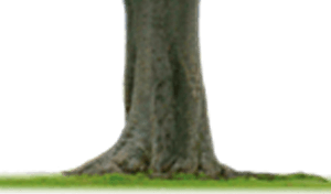 Gr. 4 Basisvorm (stam)